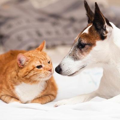 Cuidado animal